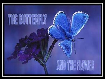 Once there was a man who asked God for a flower........and a butterfly.