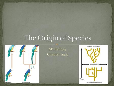 AP Biology Chapter 24.4. Process of making a species Biological Species Concept: Populations are no longer capable of interbreeding.