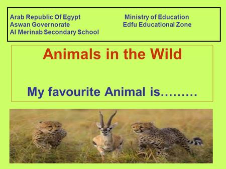 Arab Republic Of Egypt Ministry of Education Aswan GovernorateEdfu Educational Zone Al Merinab Secondary School Animals in the Wild My favourite Animal.