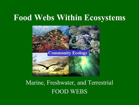 Food Webs Within Ecosystems