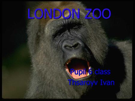 LONDON ZOO LONDON ZOO Pupil 6 сlass Pupil 6 сlass Thsaroyv Ivan Thsaroyv Ivan.