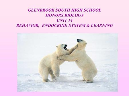 GLENBROOK SOUTH HIGH SCHOOL HONORS BIOLOGY UNIT 14 BEHAVIOR, ENDOCRINE SYSTEM & LEARNING.