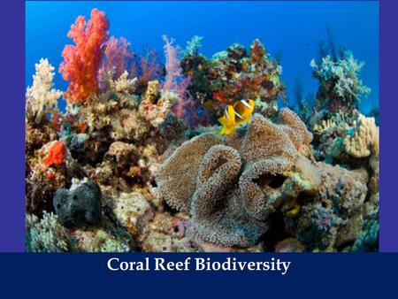 Coral Reef Biodiversity. Biodiversity The variety of the earth's species, the genes they contain, the ecosystems in which they live and the ecosystem.