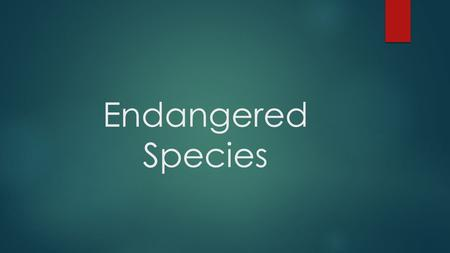 Endangered Species. Endangered Species Act of 1973  Requires the U.S. Department of Interior to protect species in danger of extinction  Endangered.