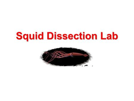 Squid Dissection Lab. SQUID DISSECTION LAB Need: NO Gum/Food/Drinks, Hair pulled back out of face Groups of 4-5. Gather paper towels. Gather all needed.