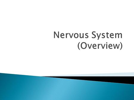 Nervous System (Overview)