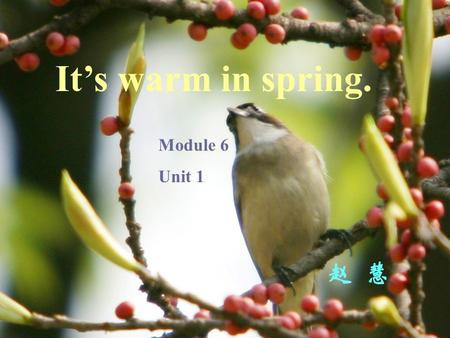 It's warm in spring. Module 6 Unit 1 赵 慧 Spring and autumn are very,very nice. Warm and cool ! They're very nice. Summer and winter are not very.