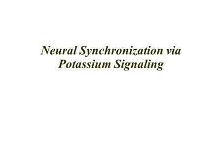 Neural Synchronization via Potassium Signaling. Neurons Interactions Neurons can communicate with each other via chemical or electrical synapses. Chemical.