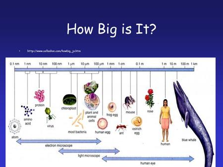 How Big is It?  1.