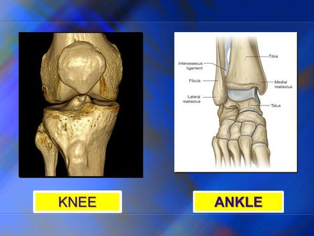 KNEE ANKLE. KNEE JOINT Prof. Makarem ARTICULATION Between the condyles of the femur and the condyles of the tibia. Anteriorly, an articulation between.