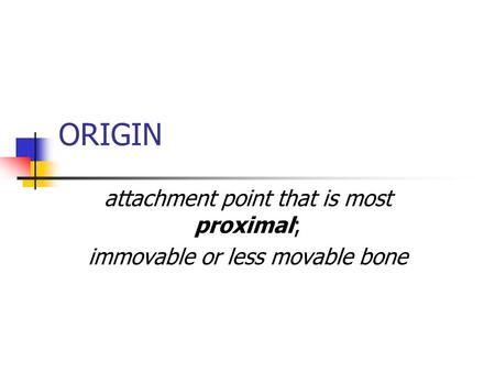 ORIGIN attachment point that is most proximal; immovable or less movable bone.