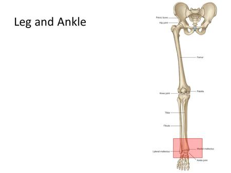 Leg and Ankle.