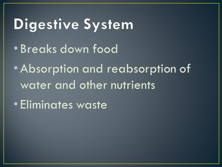 Breaks down food Absorption and reabsorption of water and other nutrients Eliminates waste.