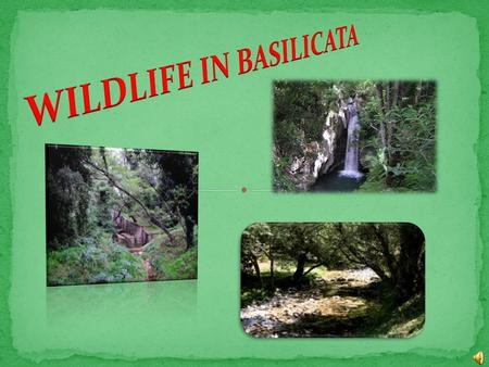There is another green area in Basilicata worth visiting. It is where the presence of two lakes of vulcanic origin makes the region even more characteristic.