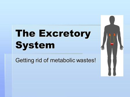 The Excretory System Getting rid of metabolic wastes!