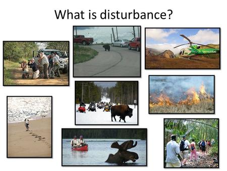 What is disturbance?. Disturbance effects Physiology – Stress – Energetics – Body condition Behavior – Movement – Habitat use Fitness – Mortality – Reproductive.