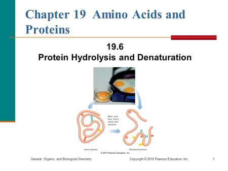 General, Organic, and Biological Chemistry Copyright © 2010 Pearson Education, Inc.1 19.6 Protein Hydrolysis and Denaturation Chapter 19 Amino Acids and.