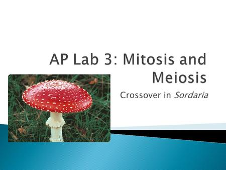 AP Lab 3: Mitosis and Meiosis