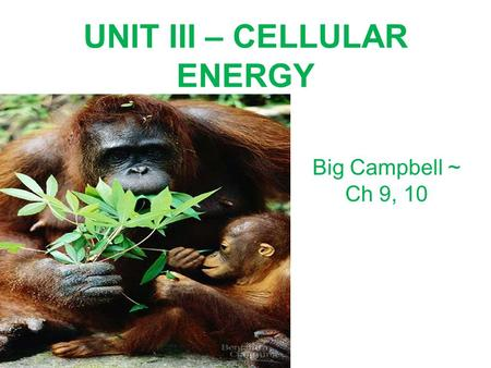 UNIT III – CELLULAR ENERGY