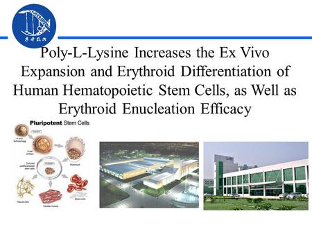 Poly-L-Lysine Increases the Ex Vivo Expansion and Erythroid Differentiation of Human Hematopoietic Stem Cells, as Well as Erythroid Enucleation Efficacy.