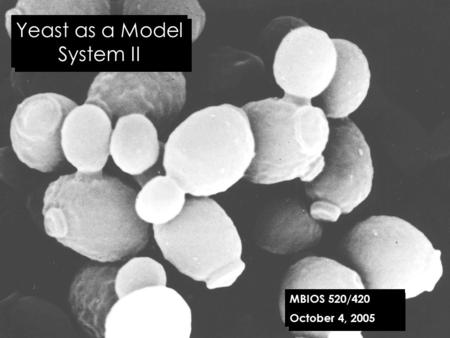 Yeast as a Model System II MBIOS 520/420 October 4, 2005.