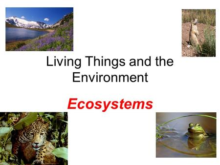 Living Things and the Environment Ecosystems. Ecology What is it? Definition: The study of how living things interact with each other and their environment.