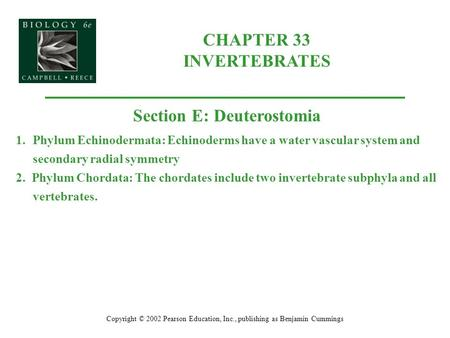 CHAPTER 33 INVERTEBRATES Copyright © 2002 Pearson Education, Inc., publishing as Benjamin Cummings Section E: Deuterostomia 1.Phylum Echinodermata: Echinoderms.
