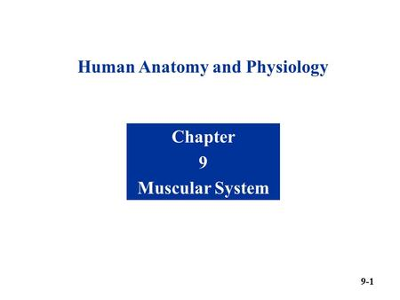 Human Anatomy and Physiology Chapter 9 Muscular System 9-1.