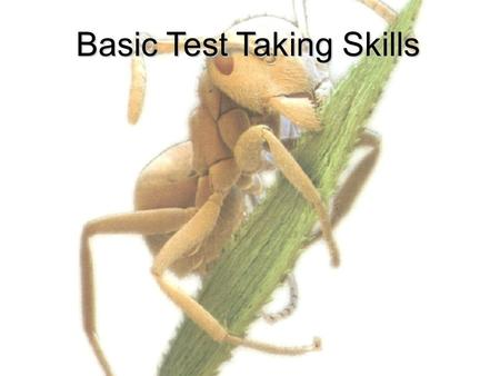 Basic Test Taking Skills