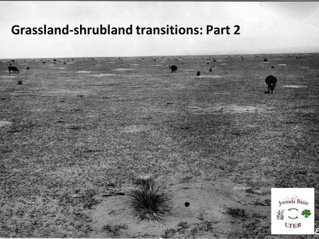 "Grassland-shrubland transitions: Part 2. Lateral flux of water, sediment, nutrients Percolation Schlesinger et al. (1990) ""islands of fertility"" or ""Jornada"""