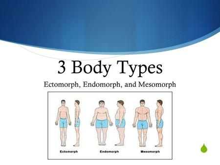 Ectomorph, Endomorph, and Mesomorph