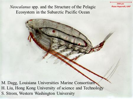 Neocalanus spp. and the Structure of the Pelagic Ecosystem in the Subarctic Pacific Ocean M. Dagg, Louisiana Universities Marine Consortium H. Liu, Hong.
