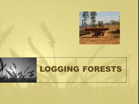 LOGGING FORESTS. Logging Forests Forests regulate climate by recycling water and carbon dioxide. transpirationOn hot days a large tree may absorb 5.5.