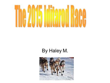 By Haley M. Welcome to my Iditarod slideshow hope you enjoy it.