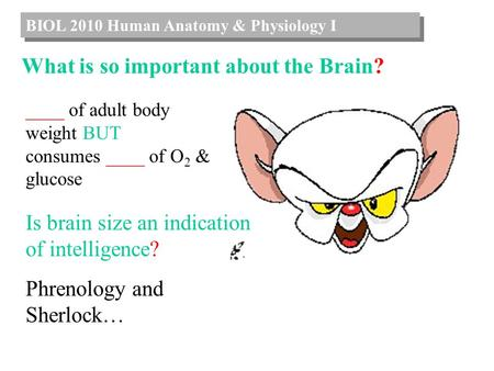 BIOL 2010 Human Anatomy & Physiology I What is so important about the Brain? ____ of adult body weight BUT consumes ____ of O 2 & glucose Is brain size.