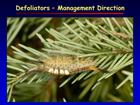 Defoliators – Management Direction. Numerous insect & disease defoliators periodically reach outbreak levels challenging management goals and options.