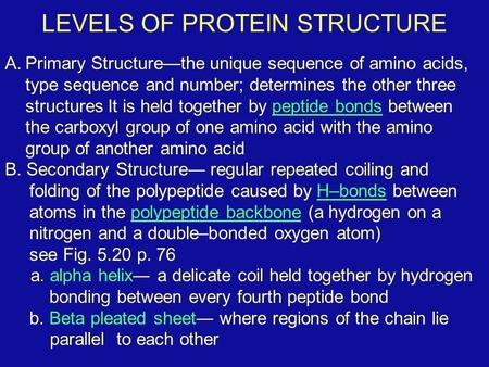 LEVELS OF PROTEIN STRUCTURE A.Primary Structure—the unique sequence of amino acids, type sequence and number; determines the other three structures It.