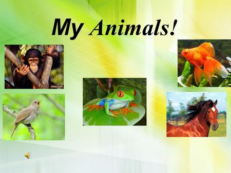 My Animals! Drinks – напої Food – їжа burgers chips sandwiches pizza milk juice orange bananas ice cream chocolate apples.