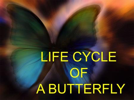 LIFE CYCLE OF A BUTTERFLY. A butterfly starts its life as an egg, laid by a female adult butterfly on the underside of leaves. Butterfly eggs vary in.