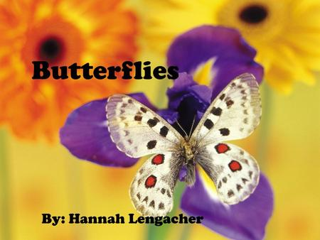 Butterflies By: Hannah Lengacher. Menu Slide  Home  Next  Previous  Back to Life Cycle Page  Back to Anatomy Page  Life Cycle Quiz  Anatomy Quiz.