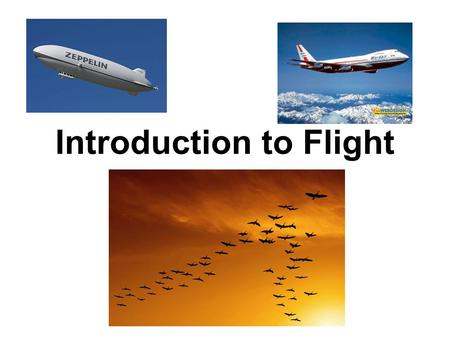 Introduction to Flight. Adaptations Features that allow a living thing to survive in its environment are called adaptations. Discuss: What are physical.