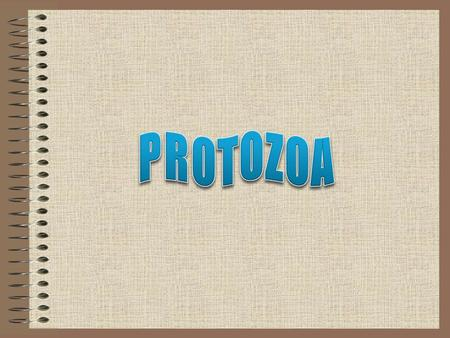 Protozoa has a cellular structure that carries out all the functions of life. Most of them can only be seen under a microscope. They do breathe, move,