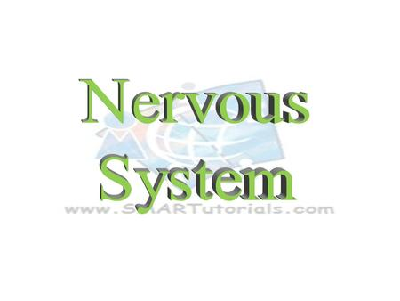 NERVOUS SYSTEM CNS PNS ANS SNS ParasympatheticSympathetic Endocrine system Endocrine system releases chemical signals that are slow to react but the effects.