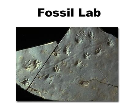 Fossil Lab. Hypothesis Question: –What do these different 'rocks' that are millions of years old tell us about the history of life on Earth? Answer: CHANGES.