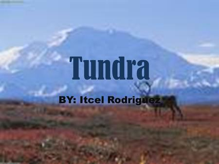 Tundra BY: Itcel Rodriguez.