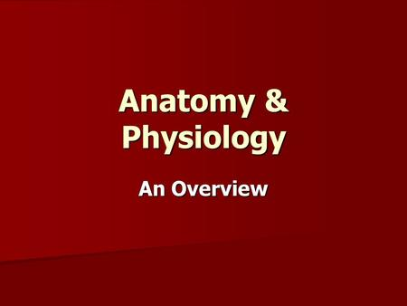 Anatomy & Physiology An Overview. Divisions Gross Anatomy – observation of large anatomical structures without the use of instrumentation or equipment.