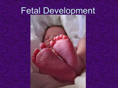 Fetal Development.