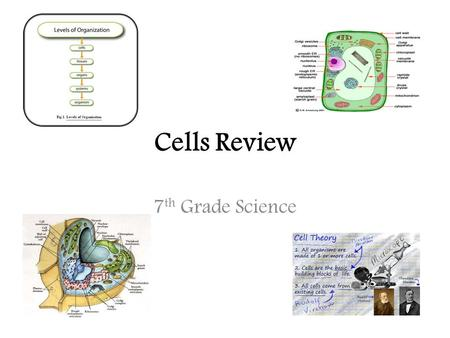 Cells Review 7 th Grade Science. Parts of a cell…you need to know them! Rough ER: site of protein production; has ribosomes on its surface Vacuole: stores.