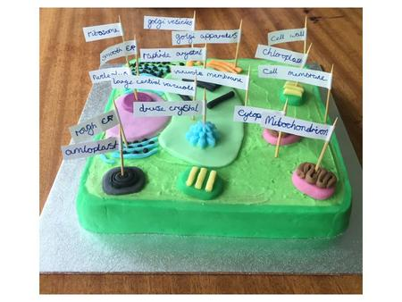 Aimee Weston's Model of a Plant Cell Cell Wall: Made of a tough substance called cellulose, which supports the cell. Cell membrane: Controls what.