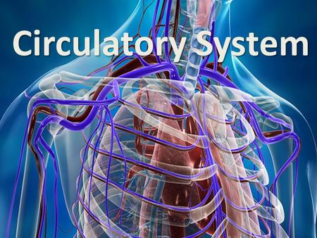Circulatory System Circulatory System. Circulatory System The bodies transport system: -Brings nutrients to the body cells (most can't acquire nutrients.